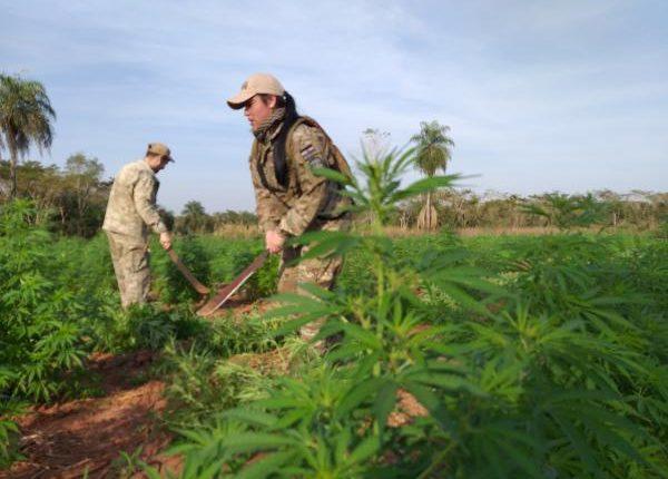 Paraguai destrói 9 hectares com 27 toneladas de maconha na fronteira