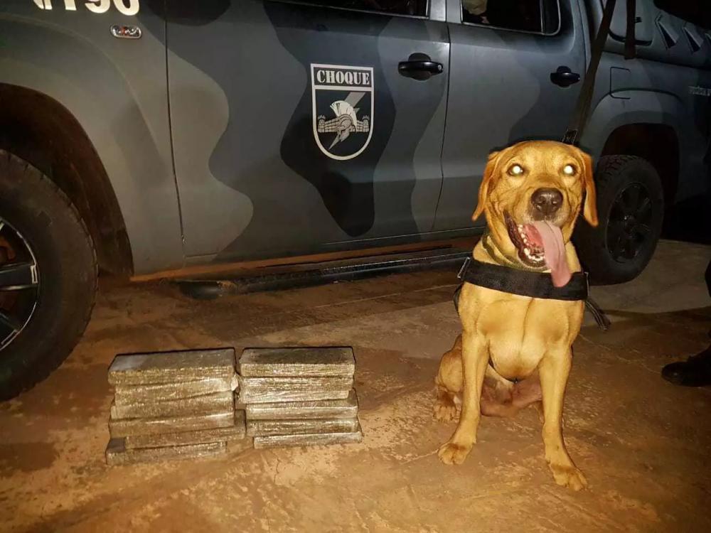 Cão farejador posa ao lado da droga localizada durante batida da polícia na rodoviária (Foto: divulgação/Batalhão de Choque)
