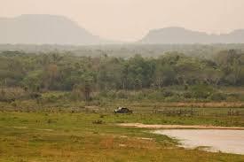 Área de mata onde ocorrem as buscas com apoio de índios (Foto: Última Hora)