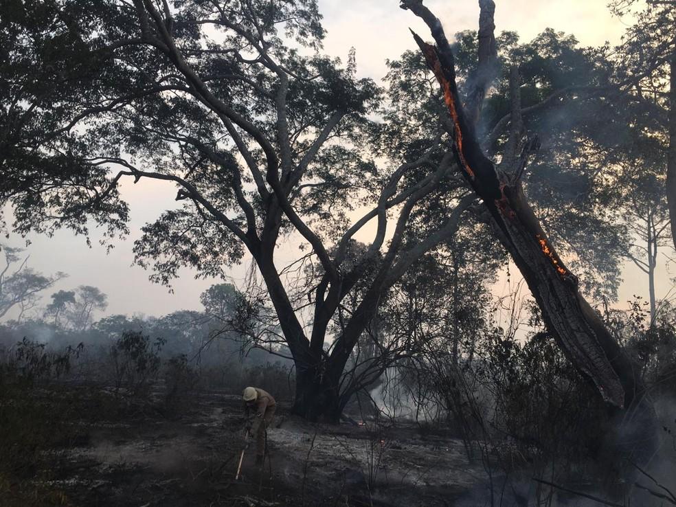 Vegetação queimada em Corumbá; árvore está em chamas — Foto: Corpo de Bombeiros/Divulgação