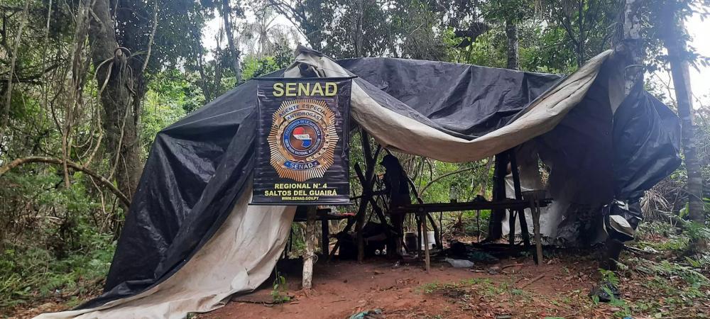 Acampamento de produtores de maconha no meio da mata na fronteira (Foto: Divulgação)
